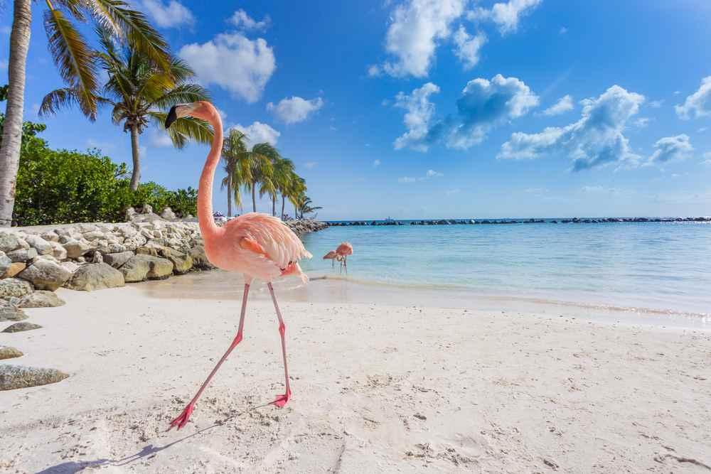 Aruba l 39 isola felice nel sud dei caraibi viaggianza for Isole da sogno a sud della birmania codycross