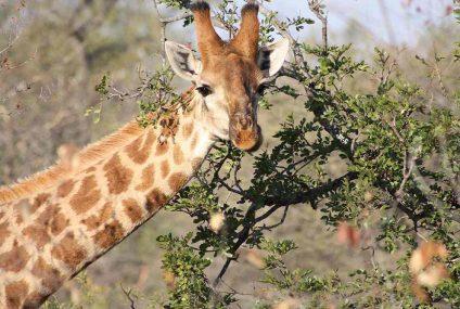 Un safari in Sud Africa: alla ricerca dei Big Five