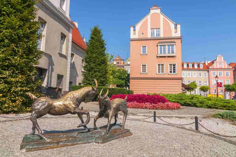 le capre combattenti di Poznan