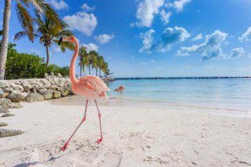Aruba, l'isola felice nel sud dei Caraibi