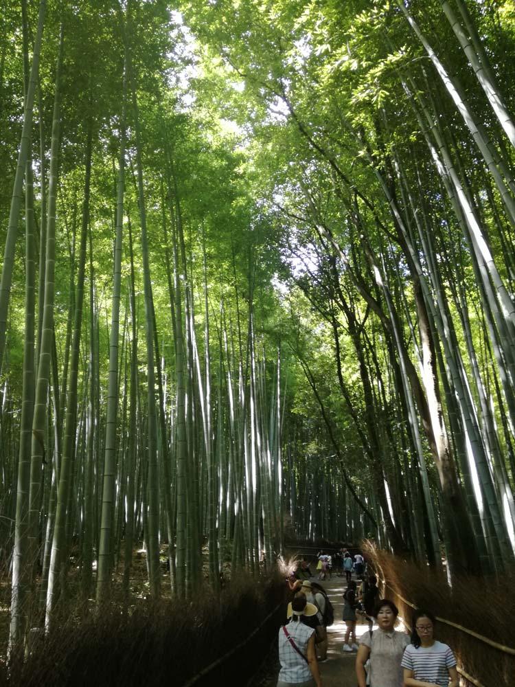 foresta di bambù kyoto