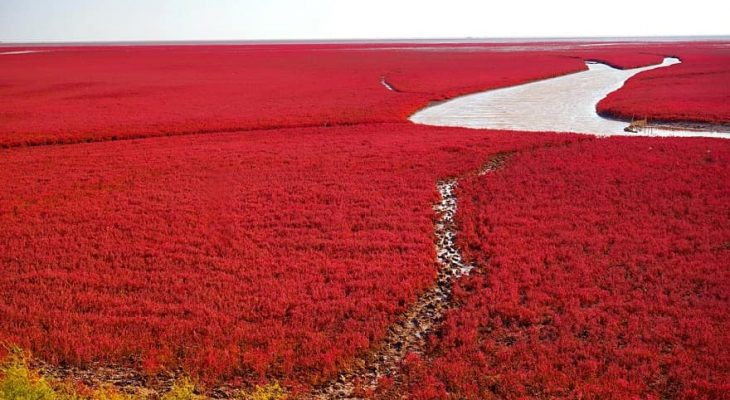 Panjin spiaggia rossa