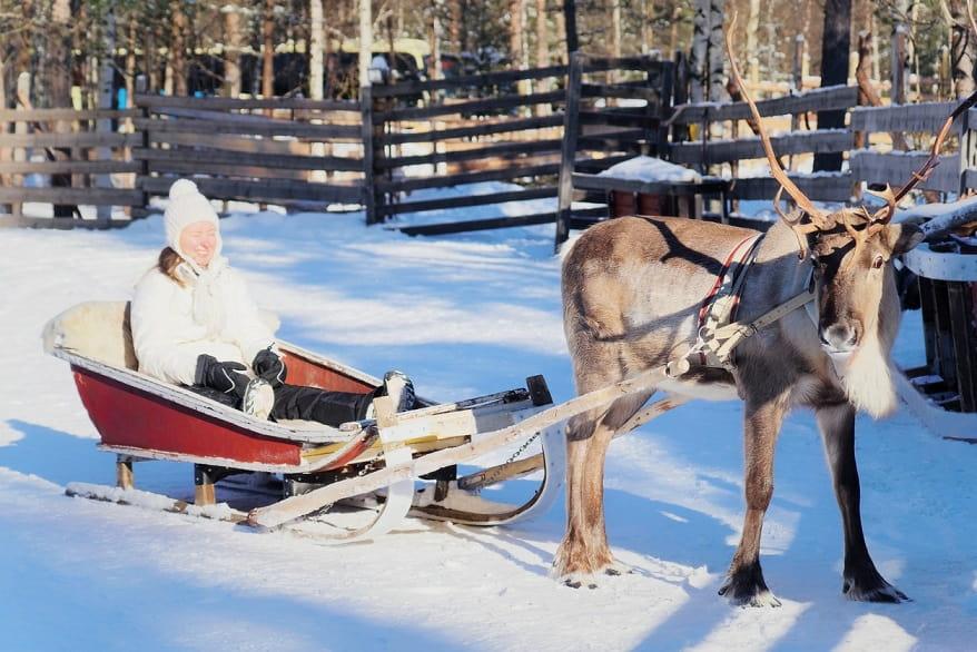 Renne a Rovaniemi